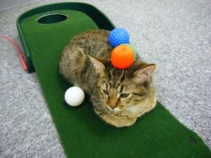 【頚椎・腰椎ヘルニアでのゴルフのプレーの仕方part2】