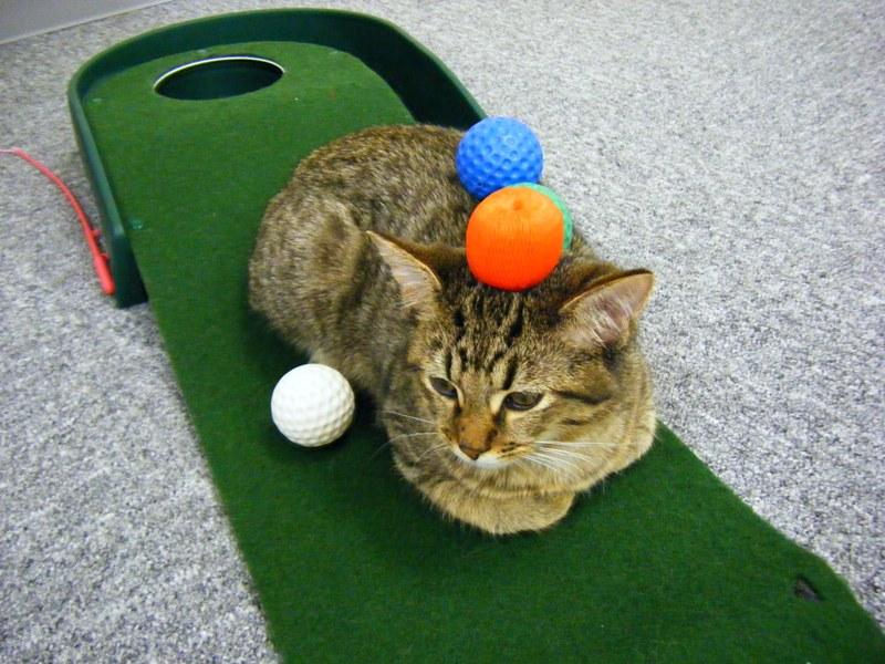 ゴルフ画像4