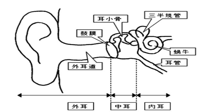 耳の内部の構造イラスト